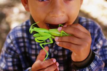 "3D Printing Company Makes Edible Cricket and Dung Beetle ""Treats"""